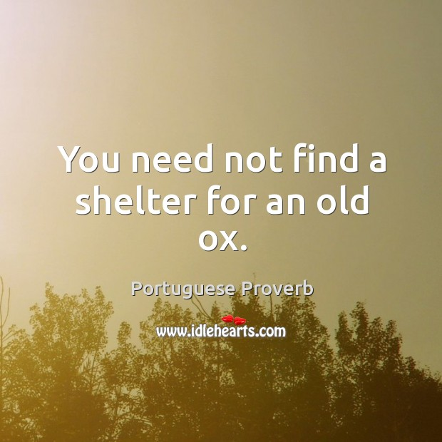 You need not find a shelter for an old ox. Image