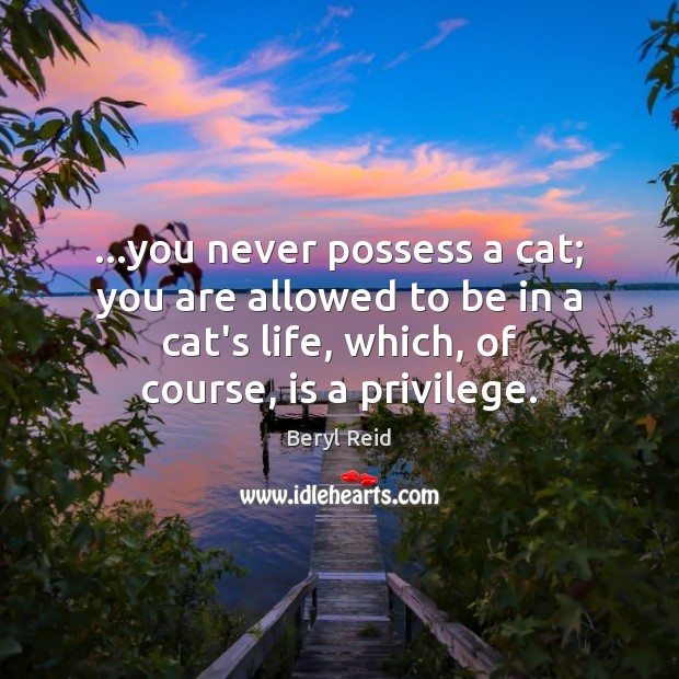 Image, …you never possess a cat; you are allowed to be in a