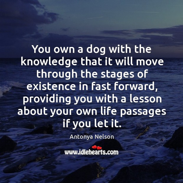 Image, You own a dog with the knowledge that it will move through