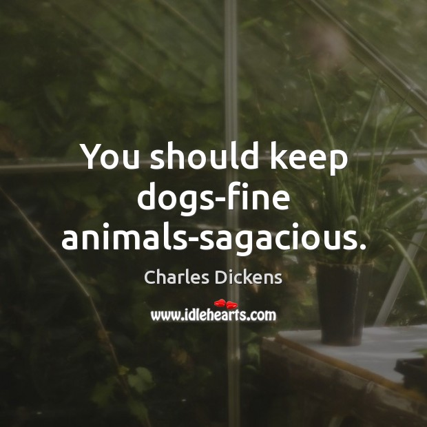 Image, You should keep dogs-fine animals-sagacious.