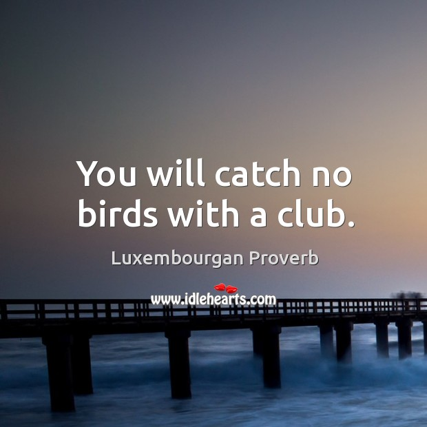 You will catch no birds with a club. Luxembourgan Proverbs Image