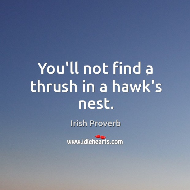Image, You'll not find a thrush in a hawk's nest.