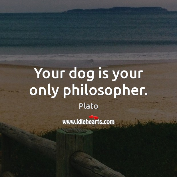 Your dog is your only philosopher. Image